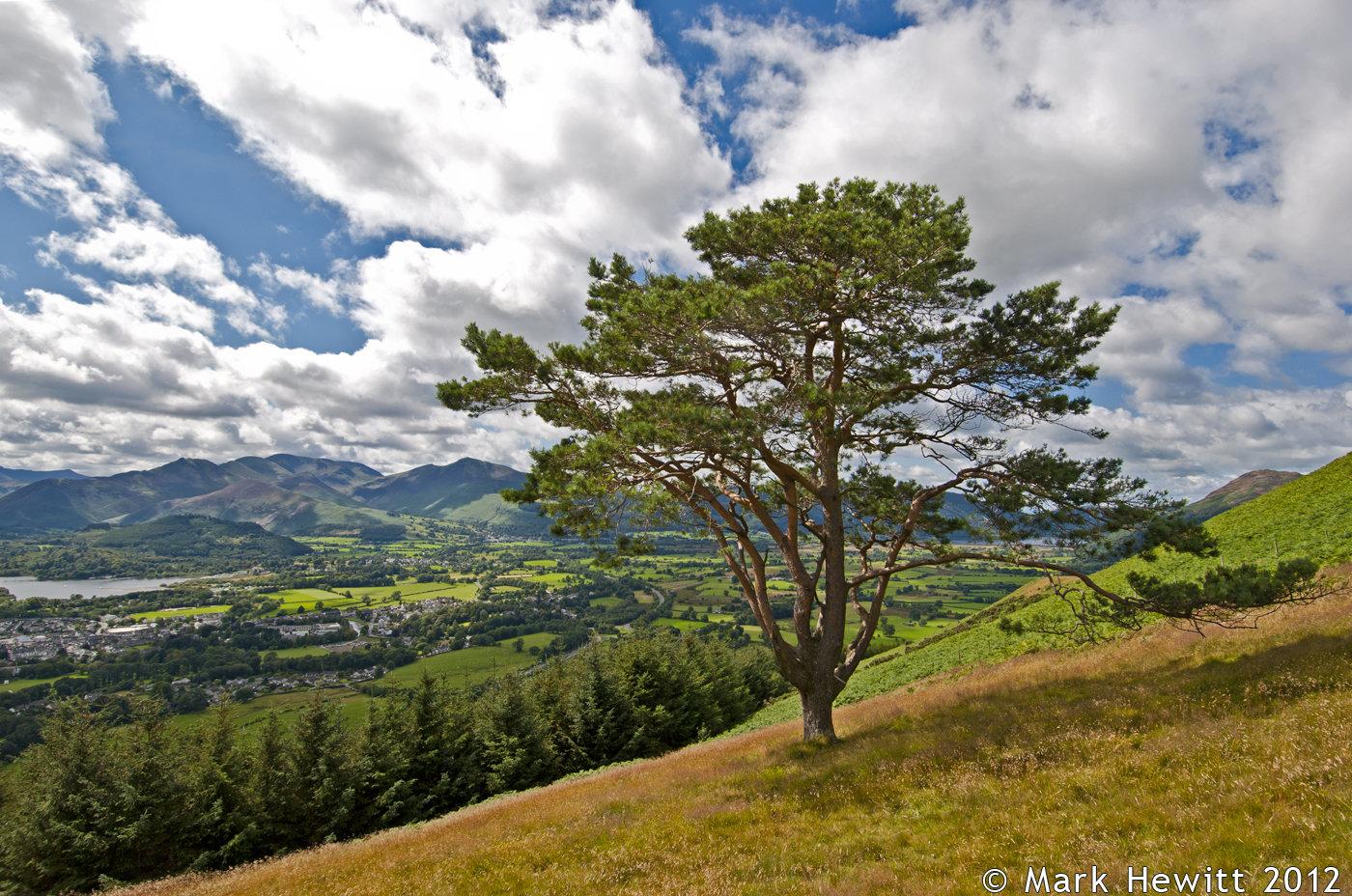 Latrigg Lone Tree