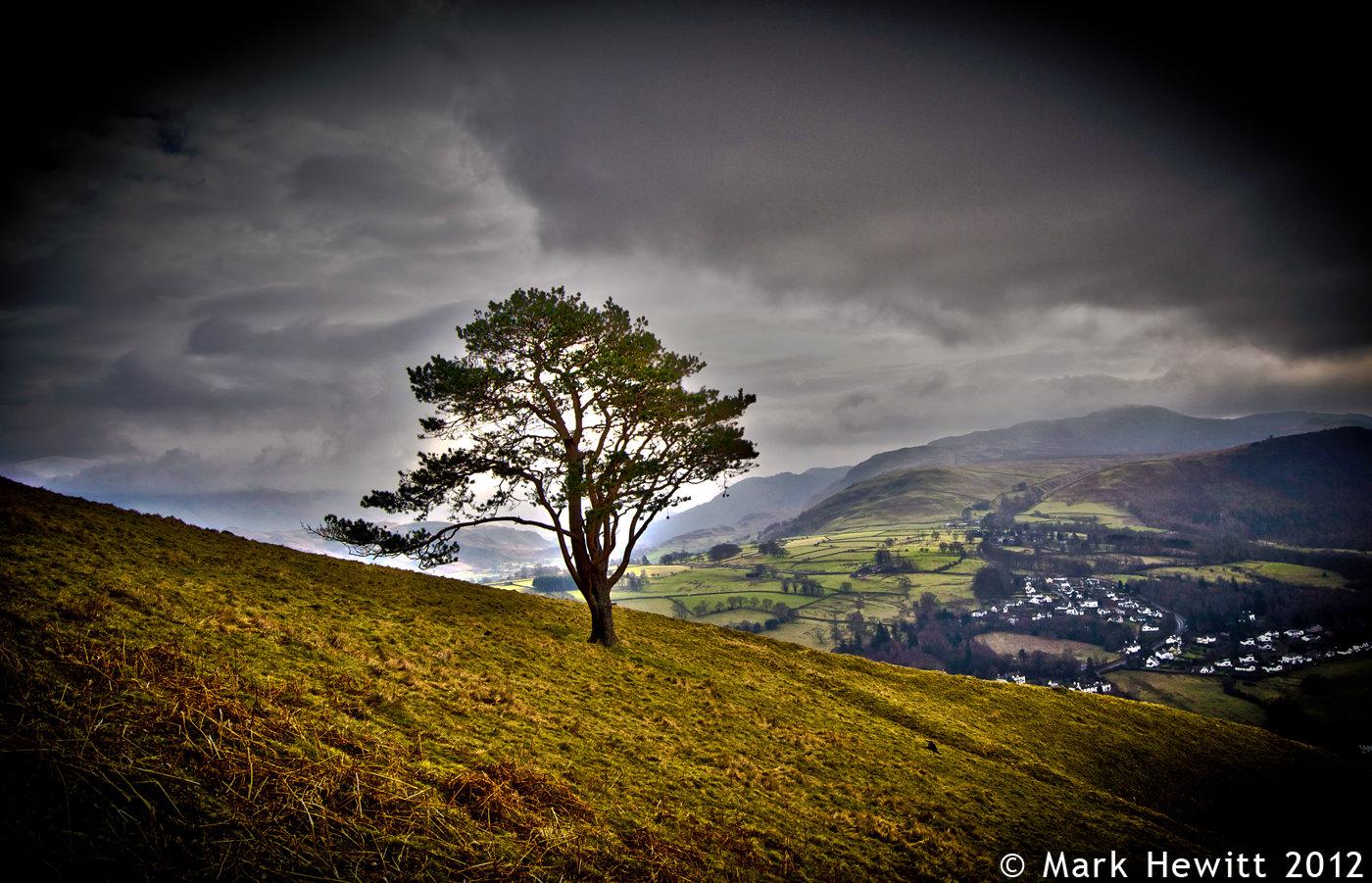 Latrigg Tree