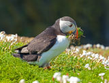 Puffin Collecting Bedding