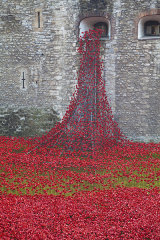 Toer Of London Poppies