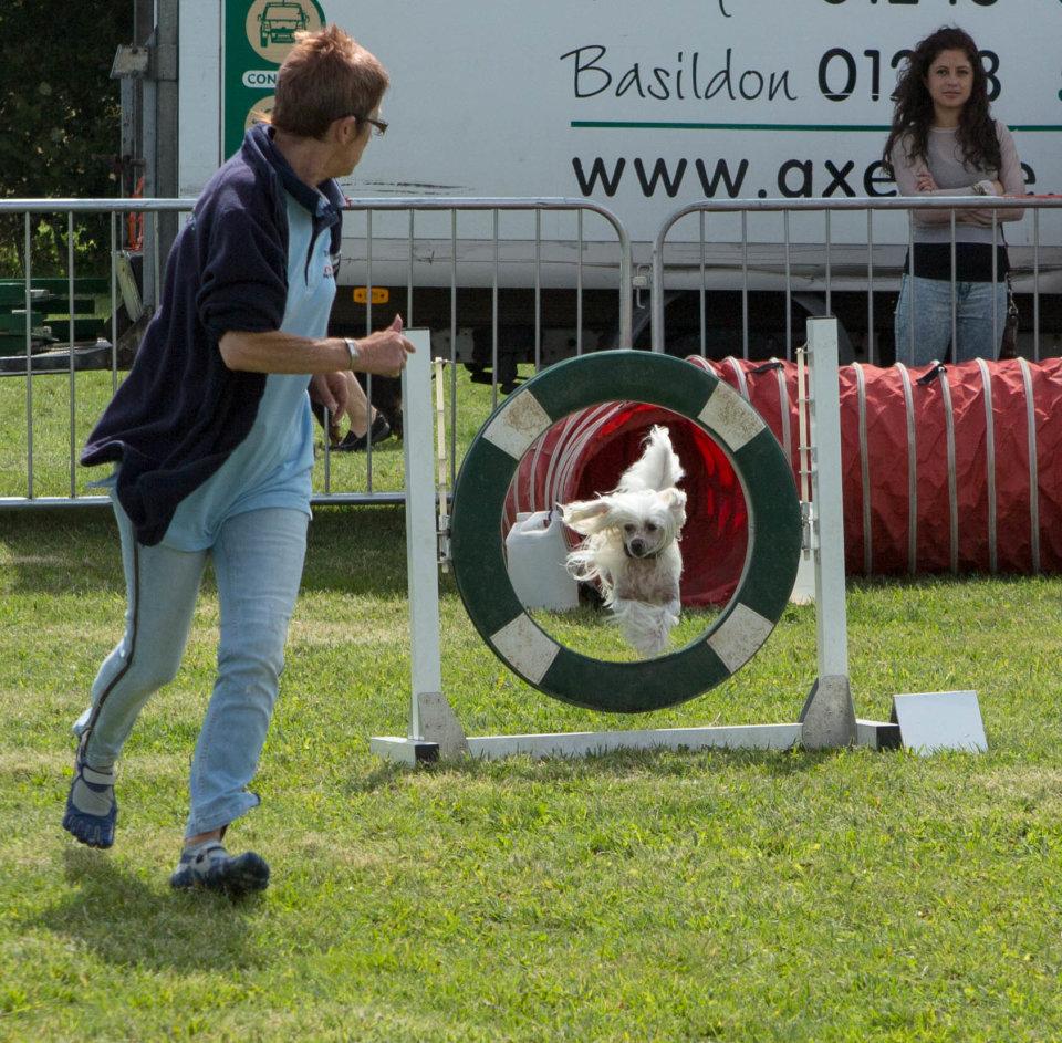 Essex Dog Show