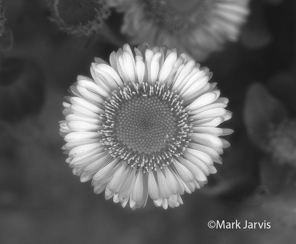 BW Flower BW