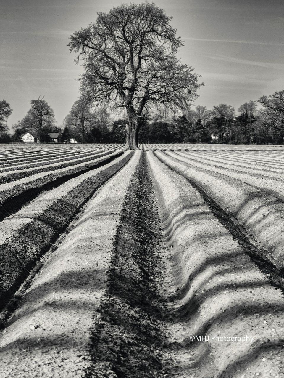 BW Plow field