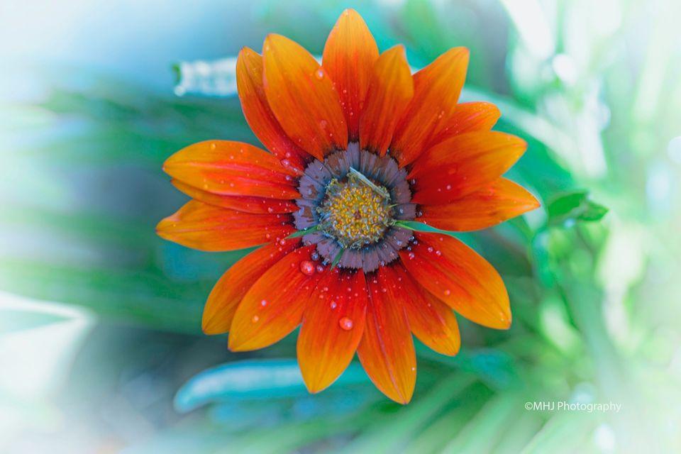 Flower Orange flower
