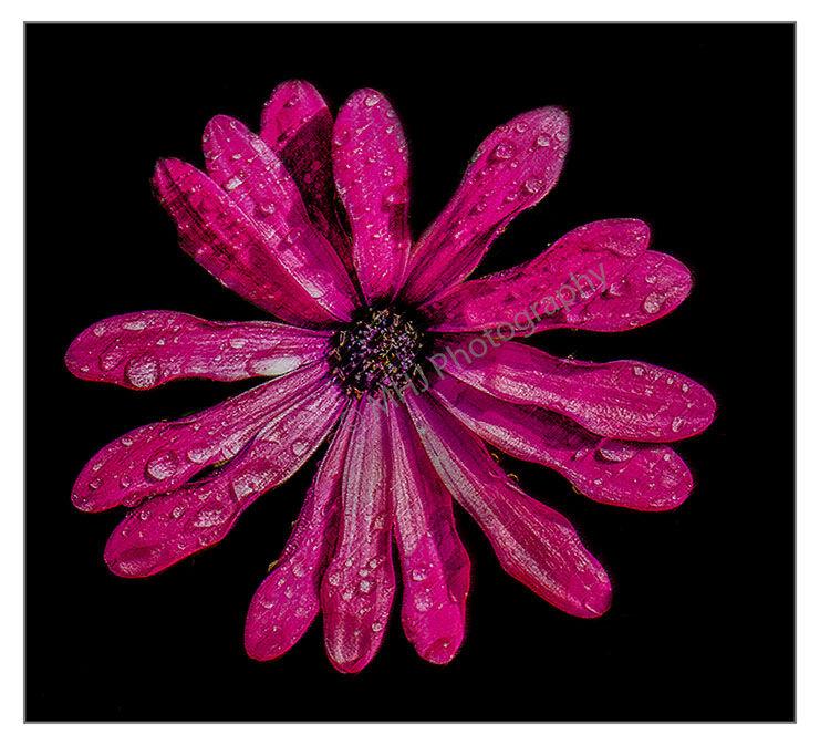 Flower Water droplets on flower