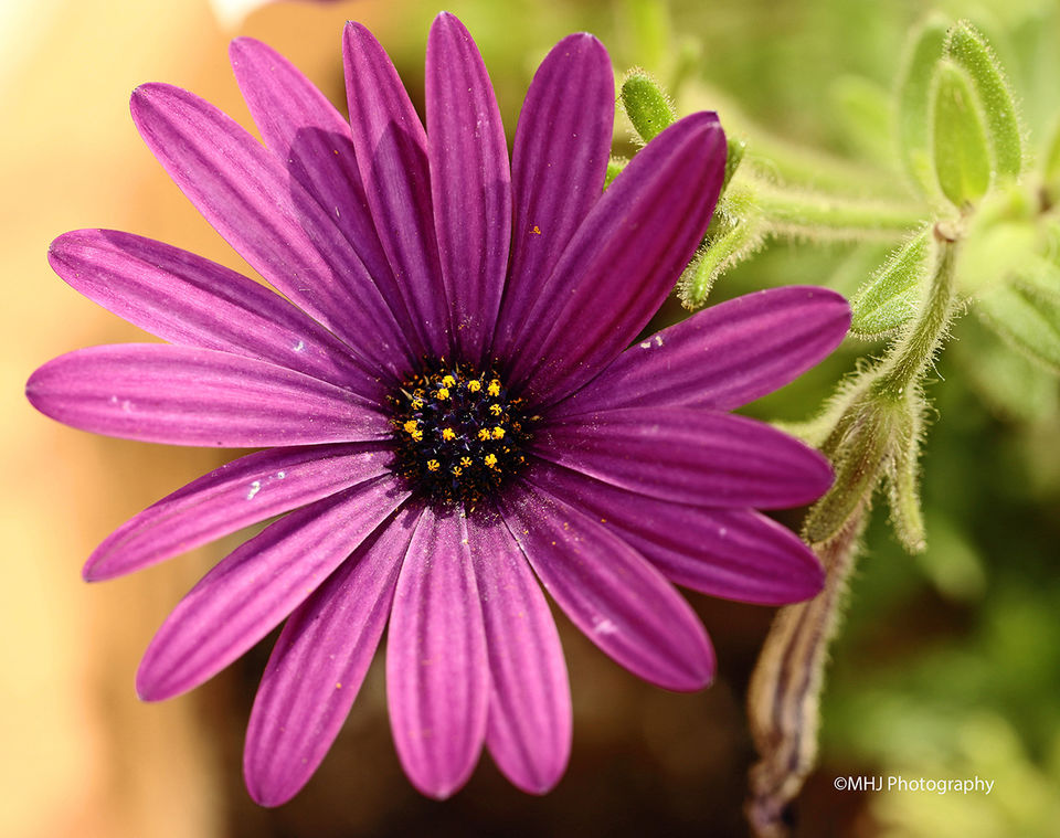 Flowers Purple flower clour