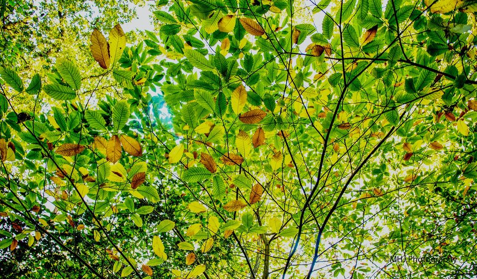 Leaf sky