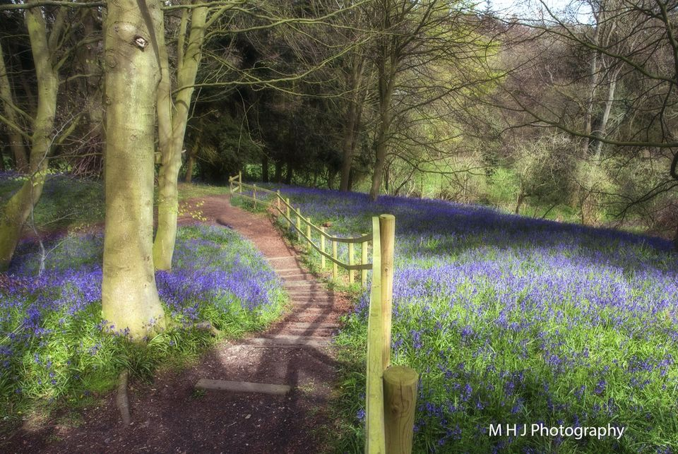 Landscape bluebell stairs
