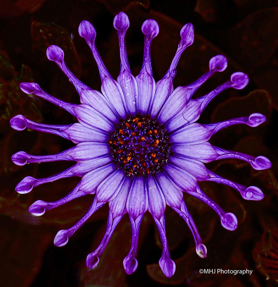 flower Purple flower