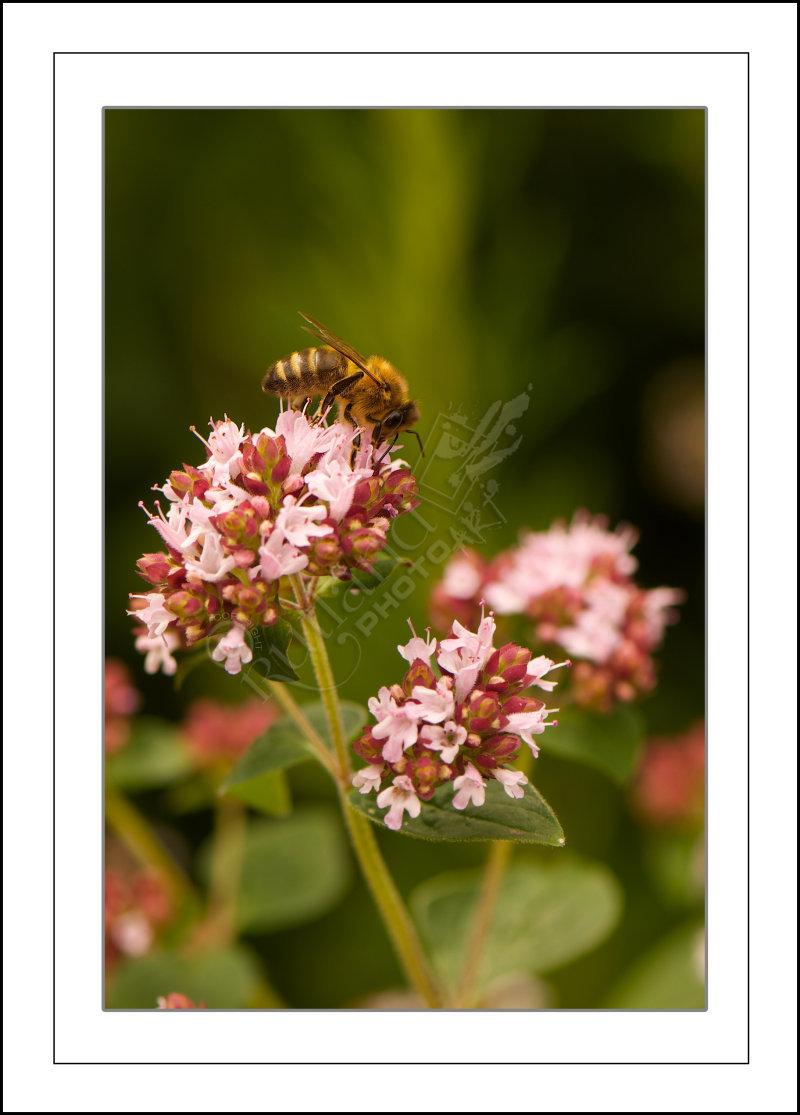 Bee's Work