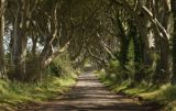 Dark Hedges, Stranocum, Ireland