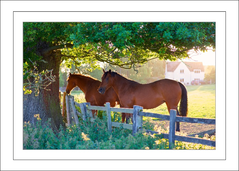 Horses in the late summer sun