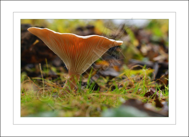 Wild Mushrooms;but are they good to eat....?