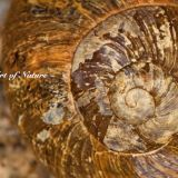 Nature's Art... The Humble Snail Shell