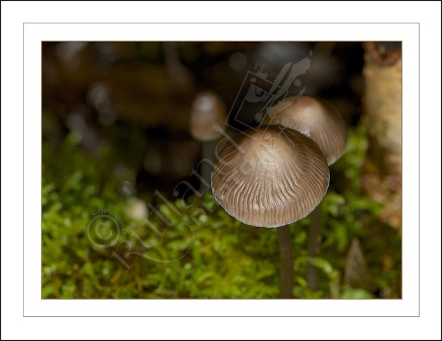 Overhead Mushrooms