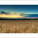 Wheat Fields at Sunset.....