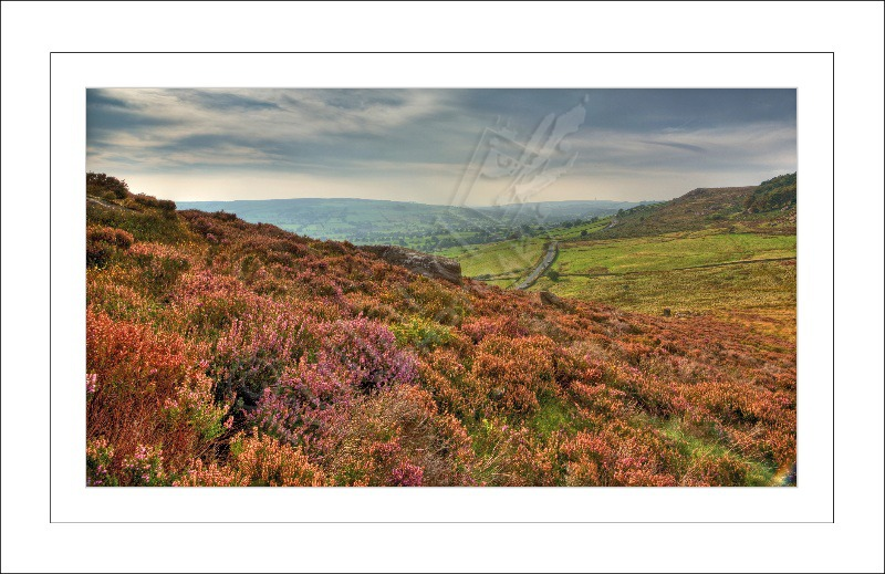 Across the Valley from The Roaches