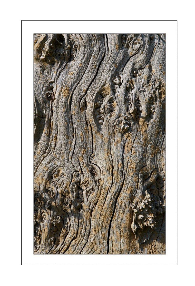 Abstract Tree….