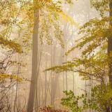 Autumn's Hanging On