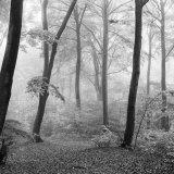 Breaking Through the Mist mono