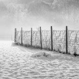Fenced in by a Frosty Web