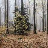 Fog in Frith Wood