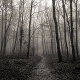 Frith Wood 10