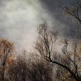 Glen Affric in the Mist 8