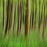 Hailey Wood 2