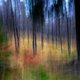Plodda Falls Forest