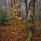 The Remains of Autumn