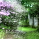 Westonbirt Summer