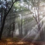 Woodland Spotlight