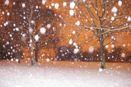 Snow fall at the park