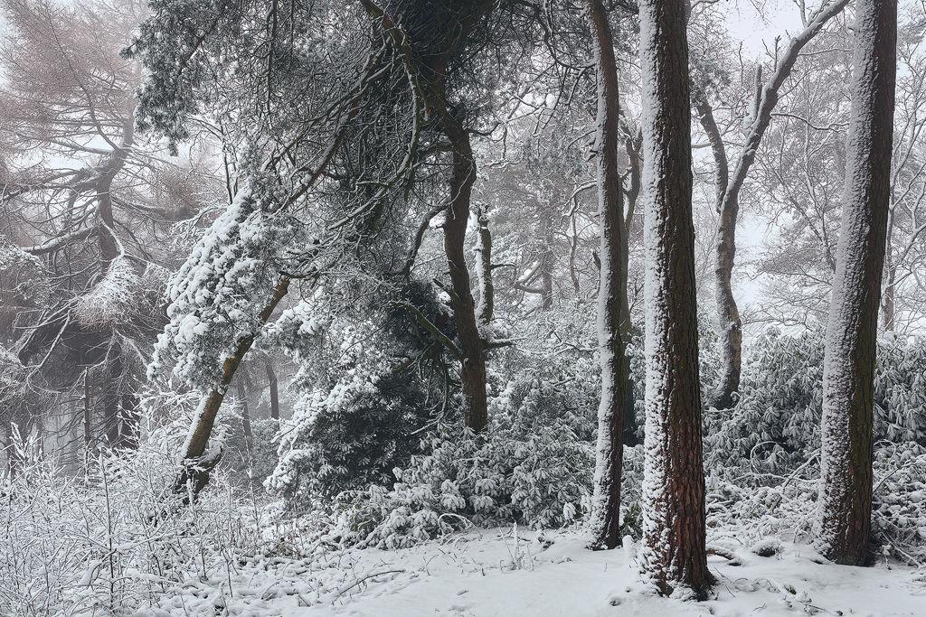 A Walk Through Winter