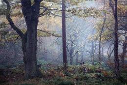 Bolehill Mist