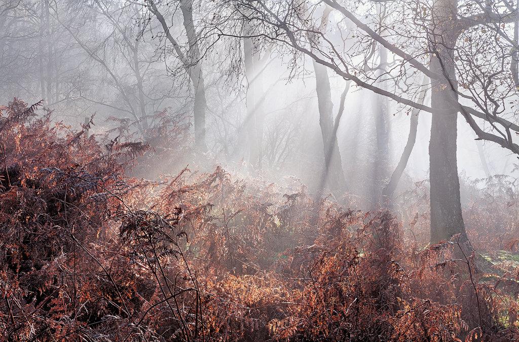 Late Autumn Fog