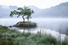Rydal Tree Pre Dawn