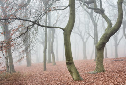 Tandle Woods in Fog no2