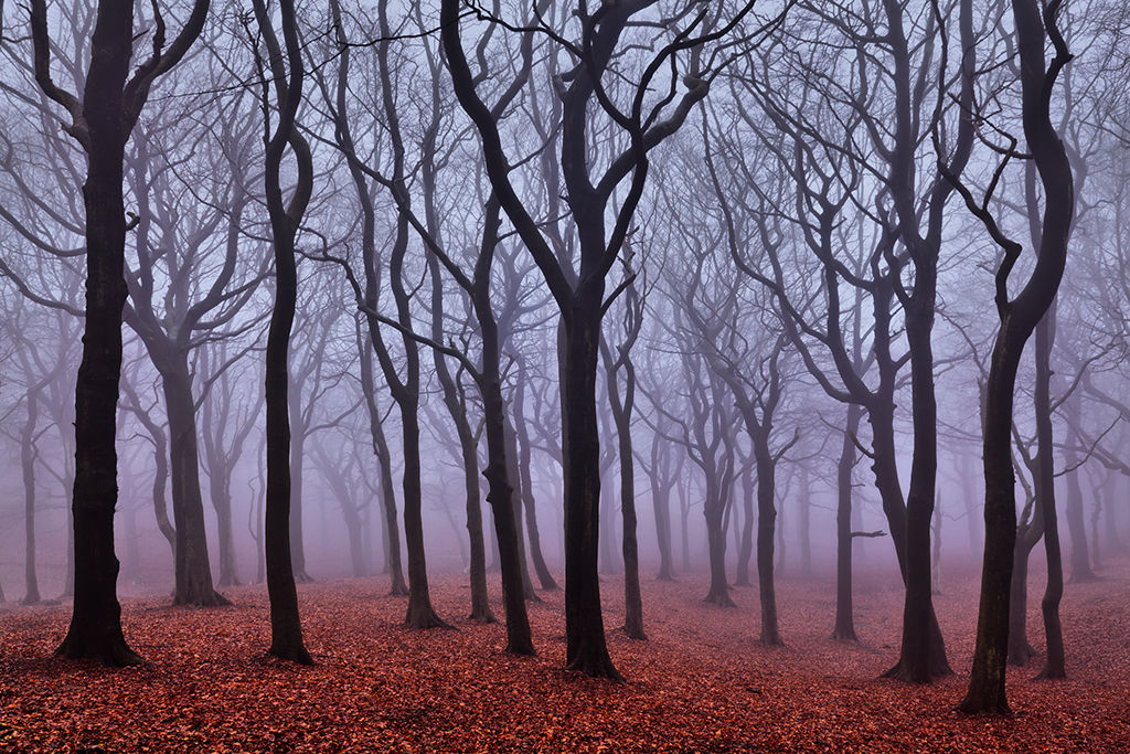 Tandle Woods in Fog