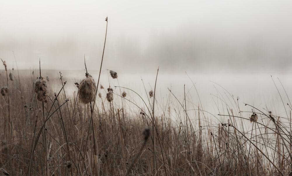Looking thru the reeds