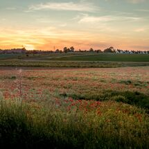 Moulsford Downs Sunset (view from Poppy field, South Stoke)