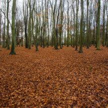 Badbury Clump - November 2014