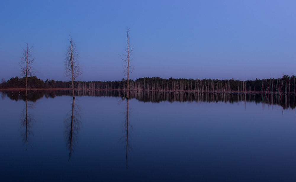 Reflections of the Pinelands