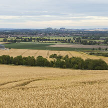 Vale of the White Horse (view towards Wittenham Clumps)