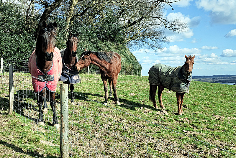 Four Horses at Brightling