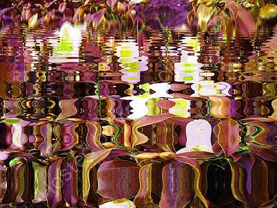 Magic Pond