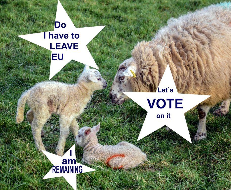 EU and Lambs
