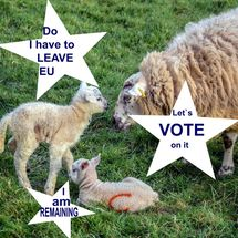 EU and Lambs