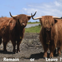 Remain or Leave ?  June 23rd 2016